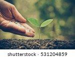 agriculture   nurturing baby... | Shutterstock . vector #531204859