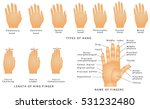 names of the fingers. types of... | Shutterstock .eps vector #531232480
