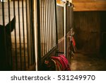 Horse In A Stall In The Stables