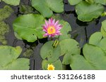Lonely Flower Water Lily On Th...