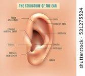 outer external part of human... | Shutterstock .eps vector #531275524