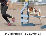 Small photo of Kooikerhondje jumps over an agility hurdle in agility competition