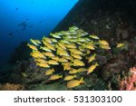 Small photo of School of Snapper fish