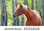Pure Bred Arabian Horse Profile