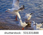flying gull | Shutterstock . vector #531331888