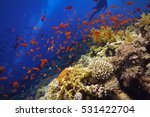Beautiful Healthy Coral Reef