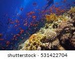 Beautiful Healthy Coral Reef