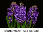 close up of blue pearl hyacinth ... | Shutterstock . vector #531433930