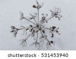 Glaze Ice On A Plant In A Forest
