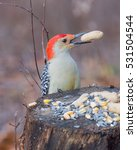 Male Red Bellied Woodpecker...