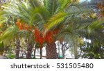 close up of a palm tree on the... | Shutterstock . vector #531505480