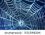 Spider Web On Blue Blurred...