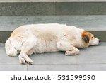 Little White Fat Dog Sleeping...