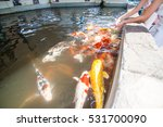 the kois in the pond  chiangmai ... | Shutterstock . vector #531700090