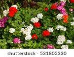 Beautiful Flower Garden Displa...