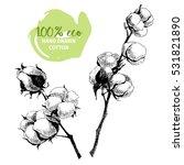 vector hand drawn set of cotton ... | Shutterstock .eps vector #531821890