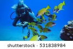 woman diving with a shoal of... | Shutterstock . vector #531838984