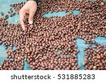 Coffee Beans Drying.natural...