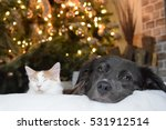 Stock photo kitten and dog 531912514