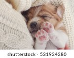Stock photo small dog puppy sleeping sweet on cozy knitted sweater human holding pet on hands animals care 531924280