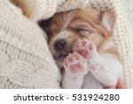 Small Dog Puppy Sleeping Sweet...