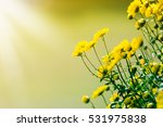 chrysanthemum blossoming in... | Shutterstock . vector #531975838
