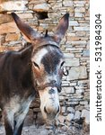 Small photo of Donkey in the village Vourliotes on the aegean island Samos