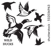 Vector Set Of Flying Wild Duck...