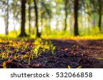 Close Up Nature Landscape In...