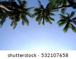 Coconut Tree Background And...