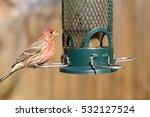 Bird Feeding At Backyard Feeder