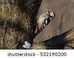 White Backed Woodpecker On A...