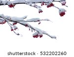 red bunches of rowan covered... | Shutterstock . vector #532202260