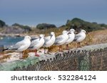 Seagulls Perched Along A Railing