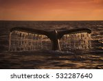a humpback whale dives into the ... | Shutterstock . vector #532287640