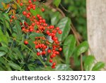 Nandina Domestica Commonly...