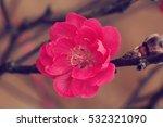 Peach Flower Background.peach...