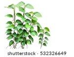 epipremnum aureum devil's ivy.... | Shutterstock . vector #532326649