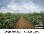 agritech system on the coffee... | Shutterstock . vector #532352398
