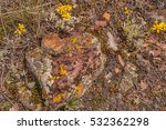 Small photo of Textures abound among the rocks, lichen, leaves, and woolly sunflowers in this colorful photo