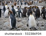 king penguins at fortuna bay ... | Shutterstock . vector #532386934