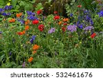 Colourful Mixed Planted Flower...