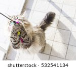 Stock photo cat playing with a feather brown siberian breed 532541134
