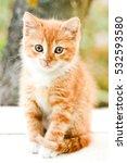 Stock photo cute little red kitten sitting 532593580