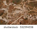 Hoarfrost On A Fern In Beams O...