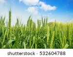 wheat field and countryside... | Shutterstock . vector #532604788