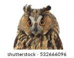 Stock photo portrait owl on a white background 532666096
