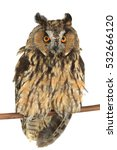 Stock photo owl with on a white background 532666120
