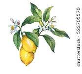 branch of the fresh citrus... | Shutterstock . vector #532705570
