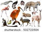 set of various south american... | Shutterstock . vector #532723504